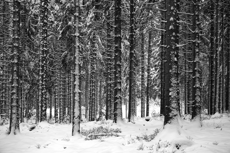 Nordschwarzwald I