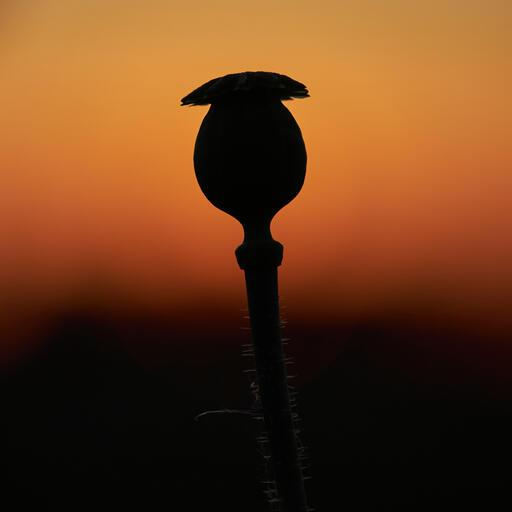 Kapsel im Sonnenuntergang