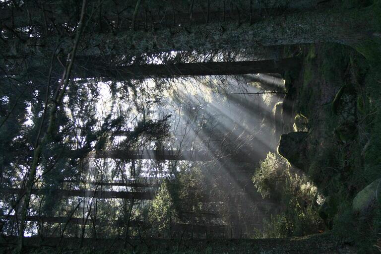 Sonnenstrahlen im Schwarzwald