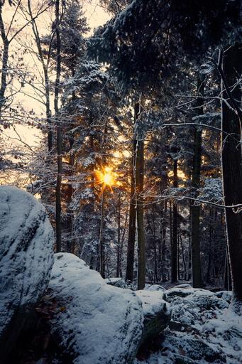 Winter im Schwarzwald II