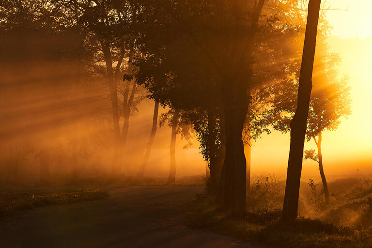 Nebelmorgen