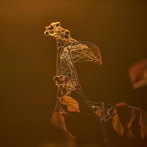 Spinnennetz im Herbstlicht