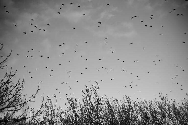 Vögel über der Wagbachniederung (Flektogon)